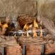 Everwarm Palmetto Oak VF gas log set